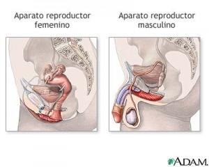 Cirugía genital femenina y masculina