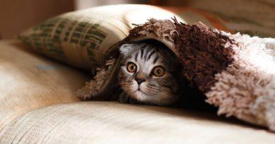 Pelos almohada