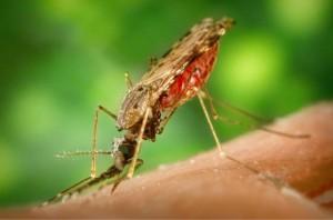Microcefalia y virus del Zika