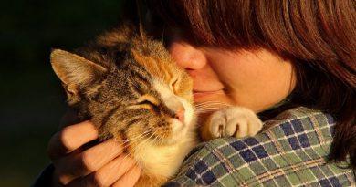 Mascotas para superar la depresión
